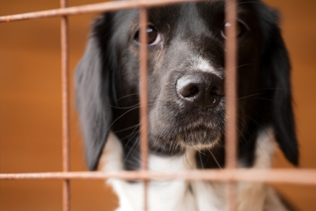 動物の避難所でのバーの後ろにホームレスの犬
