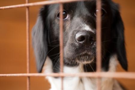 animali: cane senza casa dietro le sbarre in un ricovero per animali