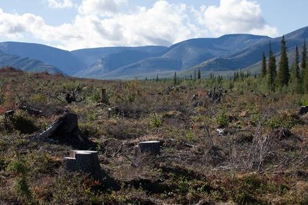 arbol de problemas: vista la deforestación con troncos de árboles en el fondo de montaña