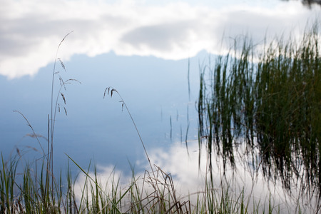 carex: cloudy sky reflection in the water surface Stock Photo