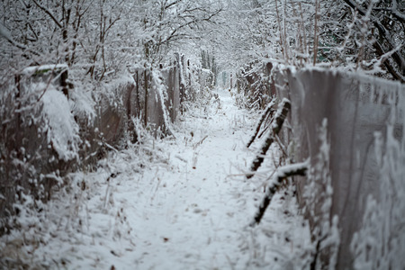 lopsided: vista perspective view of winter path way in countryside