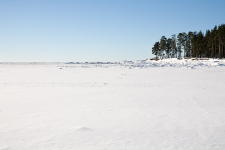 snow field: white snow field of frozen sea bay and piece of coast with pine trees