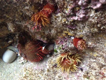 mollusk: ocean mollusk