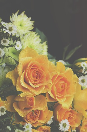 yellow roses: yellow roses on a black background, tinting, selective focus