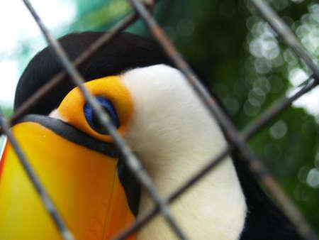 birdseye: Birdseye View Stock Photo