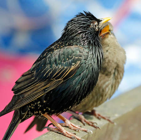 Starlings soaking up some spring sunshine