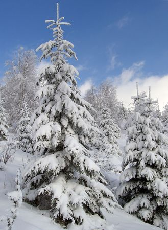 winter mountain landscape with snow - covered fir-trees Stock Photo - 586704
