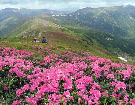 carpathian: Beautiful mountainous glade overgrown a native-flowers with view of the Chornogora ridghe (Carpathian Mts, Ukraine) and couple sweethearts