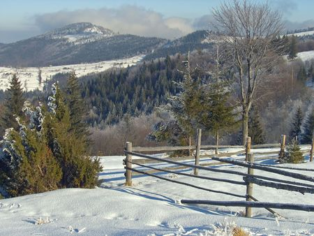 winter calm landscape with bright rime tree, some firs and wood fence on a forefront and beech forest and shine in the morning sun mount behind