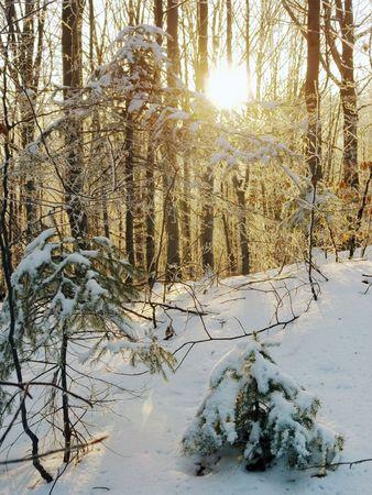 Sunrise in morning beech forest on mountainside (1) Stock Photo - 694819