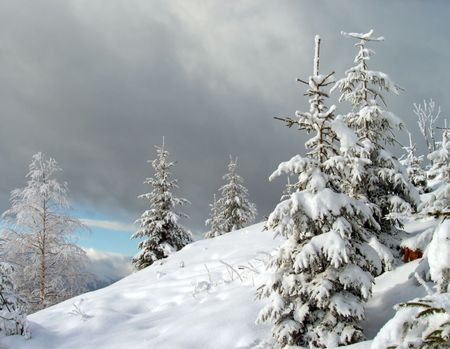 wintriness: winter landscape with bright frosty birch and fir on a forefront and overcast threatening sky behind Stock Photo