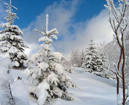 de winter sneeuw en rijp bedekt bomen op berghelling Stockfoto