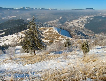 winter scene with rime grass in front, big fir-tree and forest on mountainside behind photo