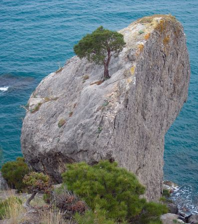 like axe rock and juniper tree on it with sea behind photo