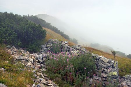 rocky mountain juniper: Stones and flowers on mountainside and cloud behind (Gorgany region of Carpathian  mountains, Ukraine)