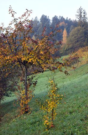 Autumn mountain view with apple tree in front Stock Photo - 1930518
