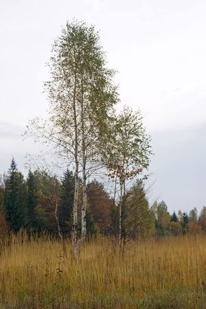 Autumn mountain hill with birch tree in front Stock Photo - 1930522