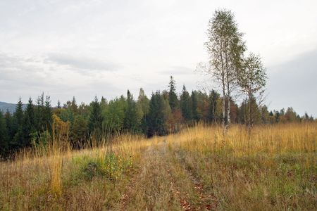 Autumn mountain hill with birch tree in front Stock Photo - 1930507