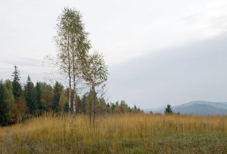 Autumn mountain hill with birch tree in front Stock Photo - 1930516