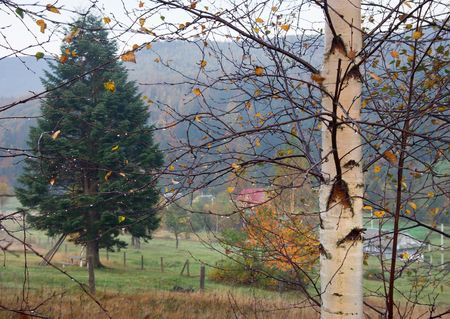 Morning dew on berch-tree twig and mountain pasture behind photo