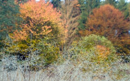 neatness: Morning dew on yellow withered autumn grass Stock Photo