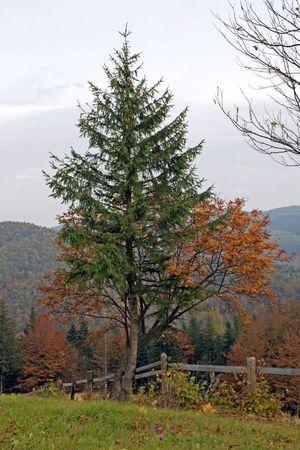 Autumn mountain tree Stock Photo - 2046743