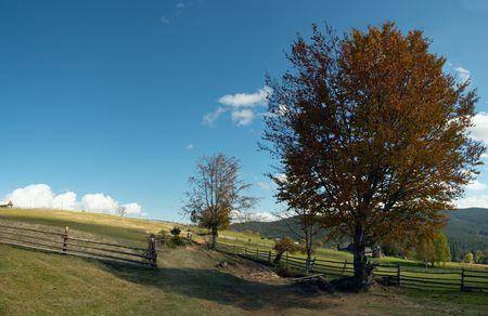Autumn big beech-tree near Carpathian country outskirts road (Ukraine). Four shots stitch image. photo