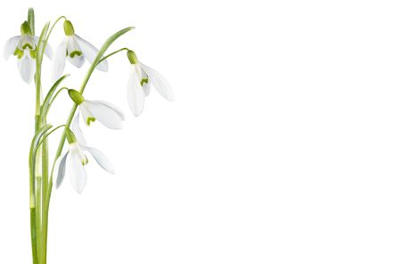 snowdrops: Spring snowdrop flowers corner set isolated on white