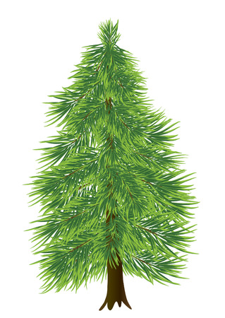 pinetree: coniferous tree isolated on white (vector) Illustration