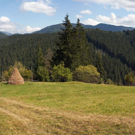 clearing the path: Summer mountain green meadow with stack of hay (Slavske village outskirts, Carpathian Mts, Ukraine).