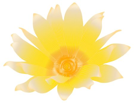 pollinate: Beautiful summer flower isolated on white (rasterize from vector )