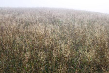 mountainside: Morning dew on fall mountainside (misty morning) Stock Photo