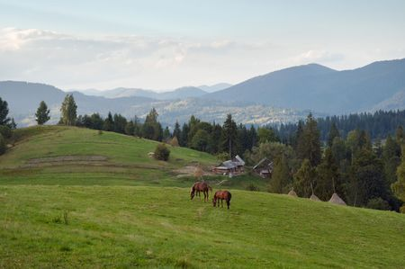 mountainside: Two horses on green mountainside (Carpathian mountain, Ukraine).