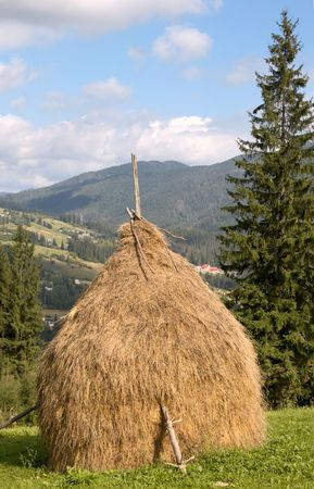 Summer mountain green meadow with stacks of hay (Carpathian Mt-s, Ukraine).  Stock Photo - 3025665