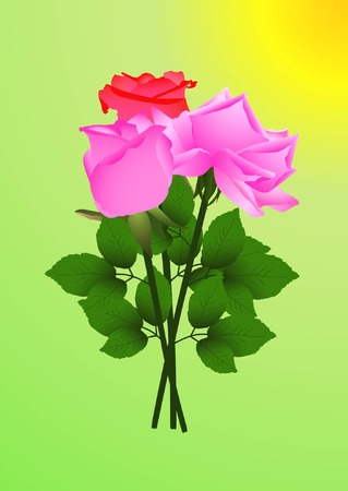 neatness: Three blossoming rose flower isolated on green (vector illustration) Illustration