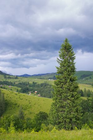 farmstead: Summer mountain view with high fir tree and storm clouds