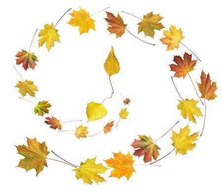 Clock shape make by colorful autumn maple and birch leafs isolated white (autumnal time round dance)  photo
