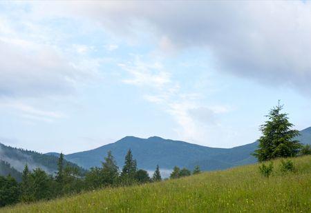mountainside: morning and summer mountainside