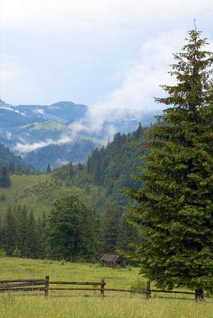 mountainside: white haze over summer mountainside