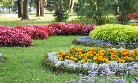 Bloeiende kleurrijke bloemperken in zomer city park Stockfoto