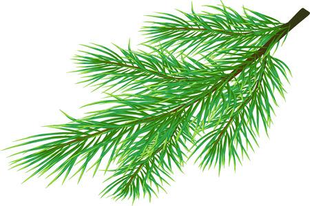 Fir twig geïsoleerd op wit (vector)  Stock Illustratie