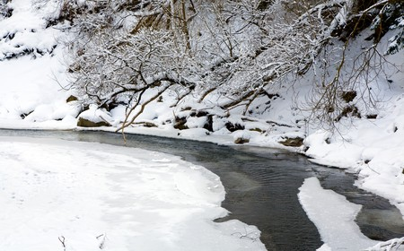 riverside trees: winter mountain river with rime covered trees and bushes on riverside