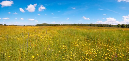 Summer meadow with blossoming wildflowers. Five shots composite picture. photo