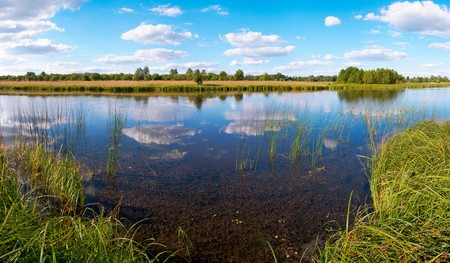 rushy: Summer rushy lake panorama view with clouds reflections. Five shots composite picture.