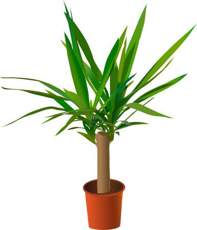 Window plant (vector) Vector