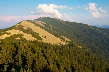 rocky mountain juniper: mountain stony view (Gorgany region of Carpathian mountains, Ukraine). Stock Photo
