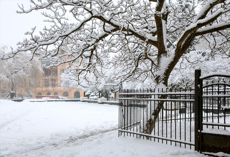 fense: winter (dull snowfall day) city park view with big snow covered tree and fense Stock Photo