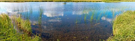rushy: Summer rushy lake panorama view with clouds reflections. Seven shots composite picture.
