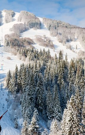 mountainside: winter calm mountain landscape with snow-covered spruce-trees and ski ropeway