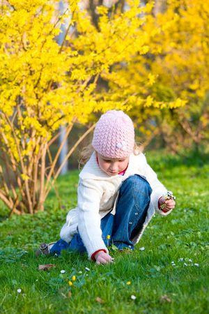 recolectar: Feliz peque�a ni�a Gowan recoger flores de color amarillo, cerca de florecimiento Forsythia arbusto Foto de archivo